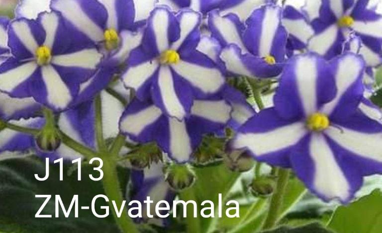 [J113] ZM-Gvatemala J113