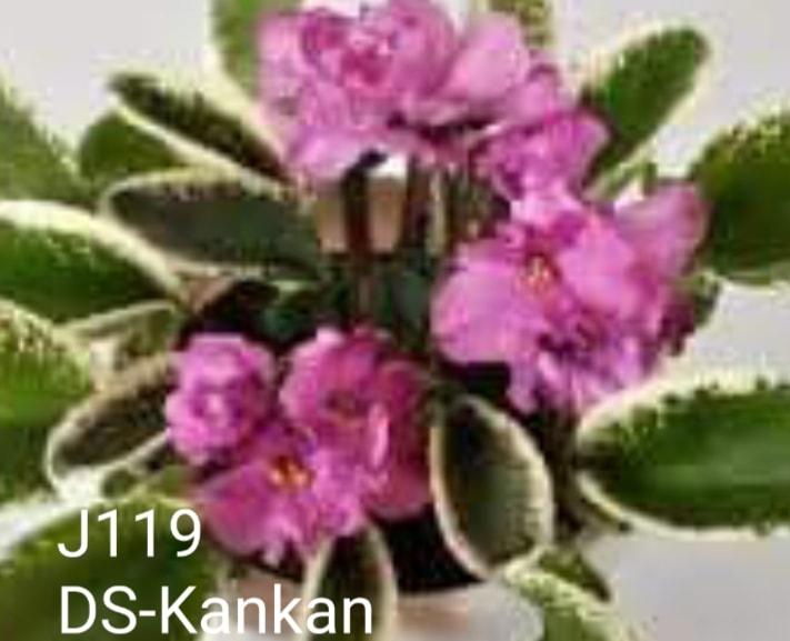 [J119] DS-Kankan J119