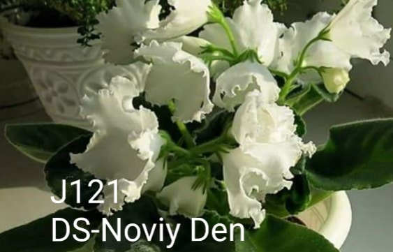 [J121] DS-Noviy Den J121