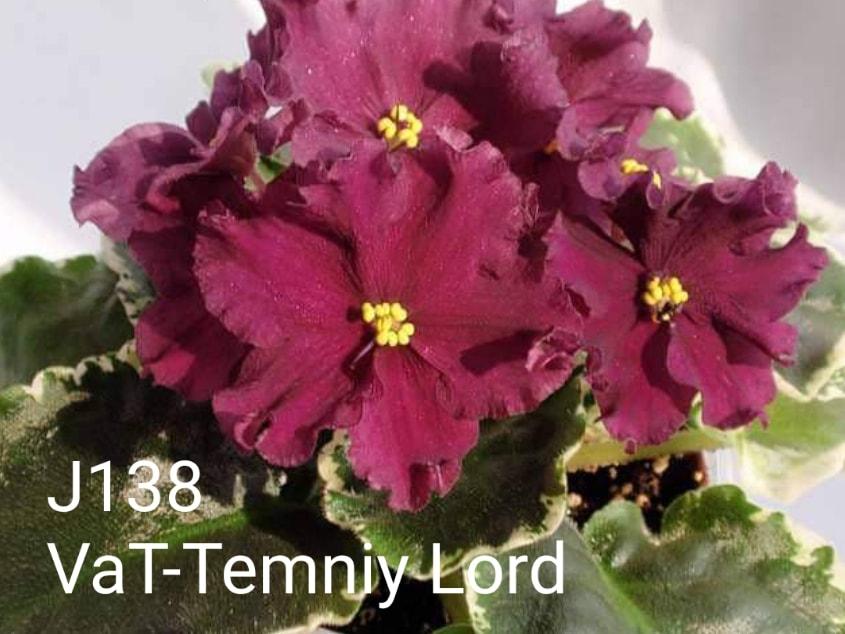 [J138] VaT-Temniy Lord J138