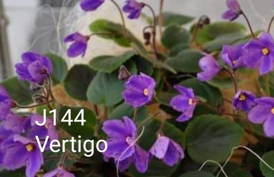 [J144] Vertigo J144
