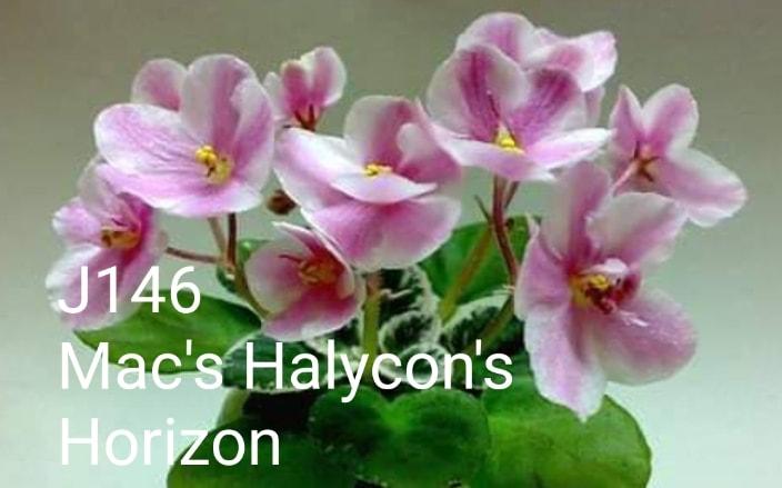 [J146] Mac's Halycon's Horizon J146