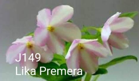 [J149] Lika Premera J149