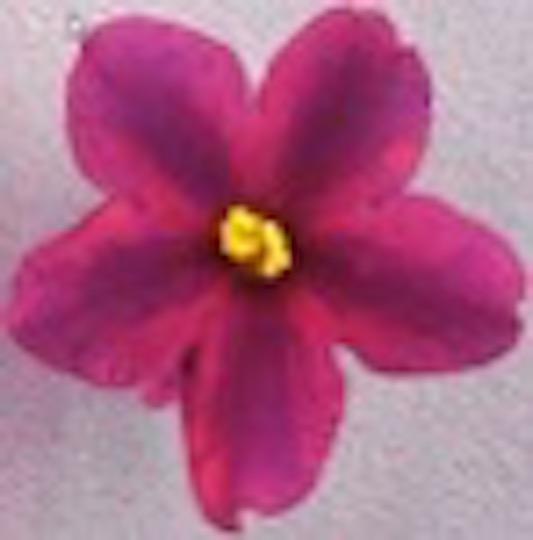 [S828+] Ma's Fleur De Lis S828+